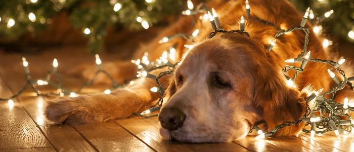 Deprimat de Crăciun?